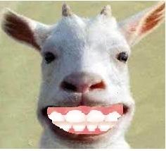 歯茎.jpg