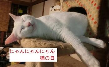猫の日.jpg